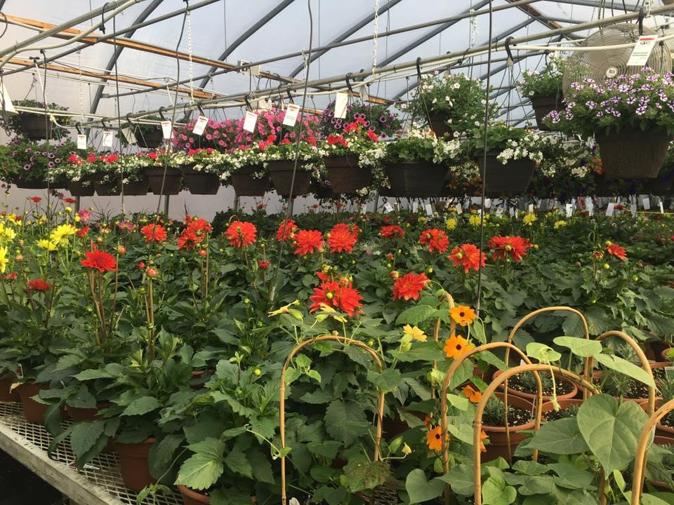 A+ Garden Center greenhouse inside
