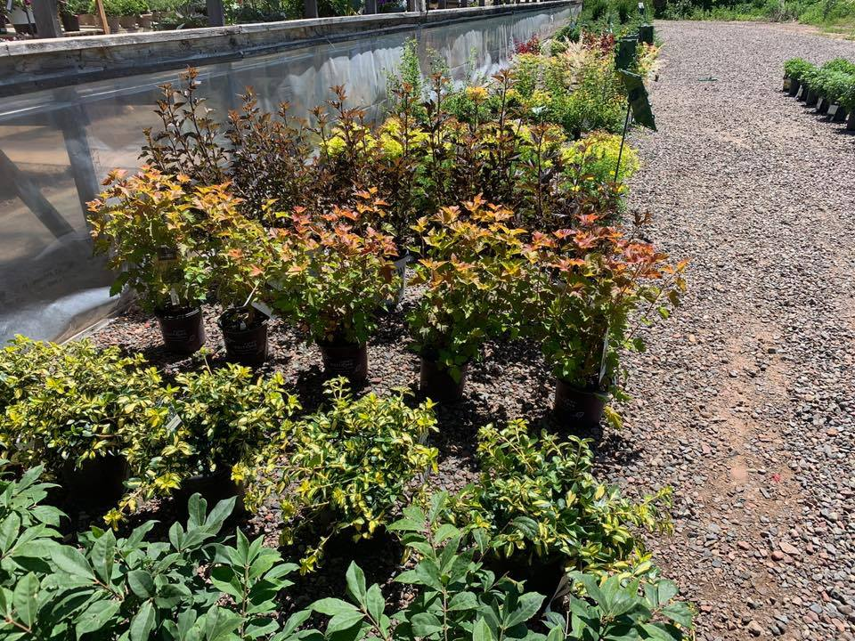 A+ Garden Center plants outside