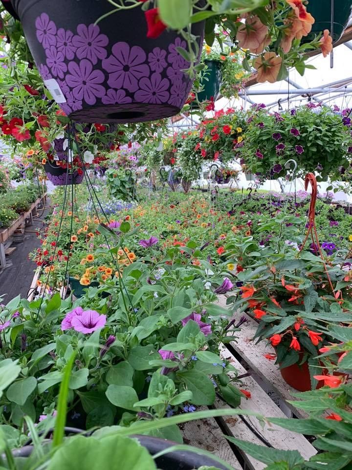 A+ Garden Center interior greenhouse