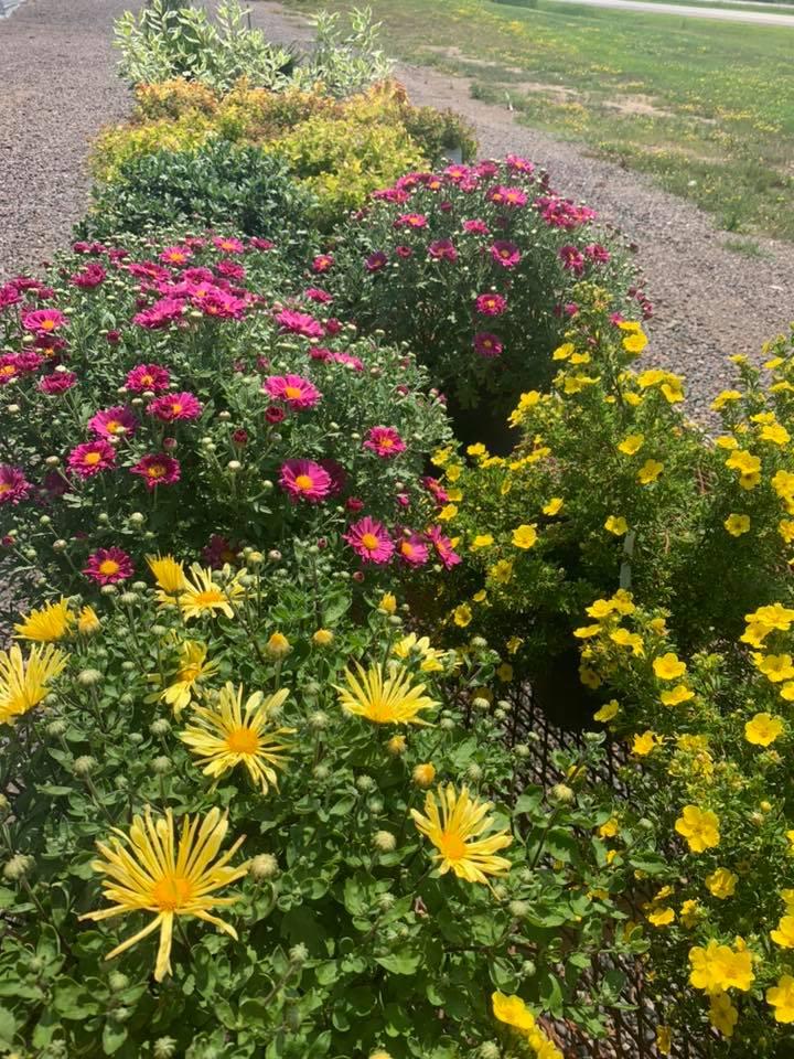 A+ Garden Center wildflowers
