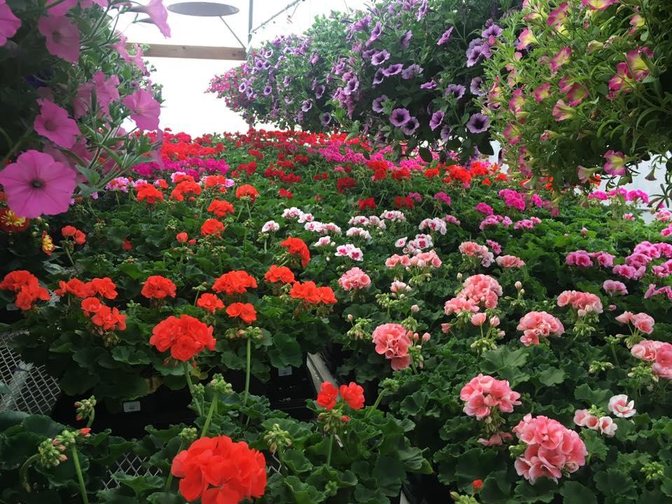 A+ Garden Center inside greenhouse