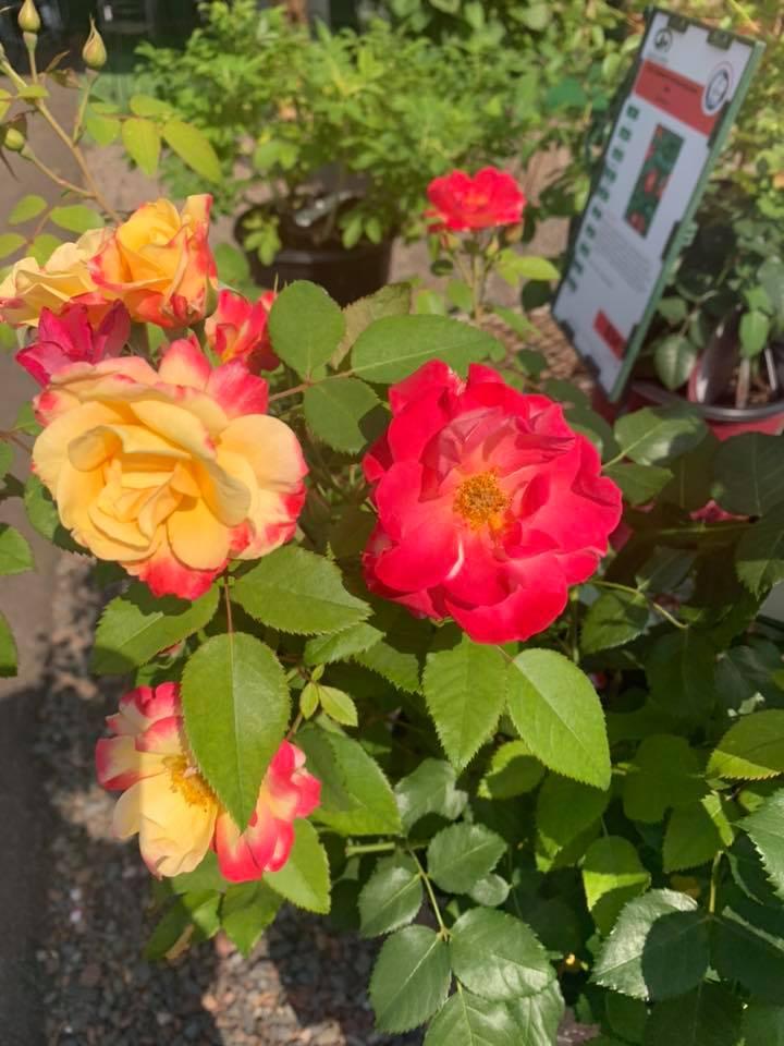 A+ Garden Center flowers