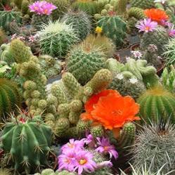 Indoor & House Plants